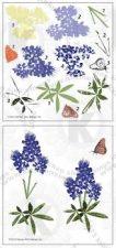 bluebonnets stamp set